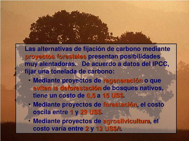 Las alternativas de fijación de carbono mediante