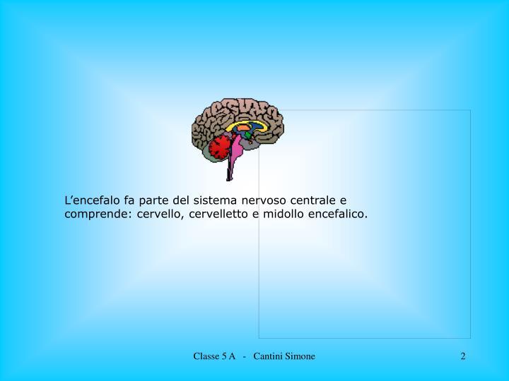 L'encefalo fa parte del sistema nervoso centrale e comprende: cervello, cervelletto e midollo encefalico.