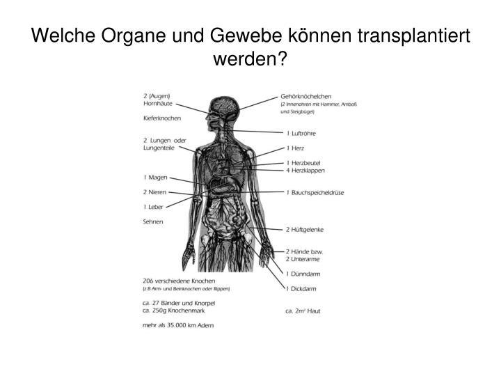 Welche Organe und Gewebe können transplantiert werden?