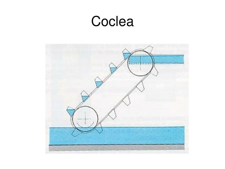 Coclea