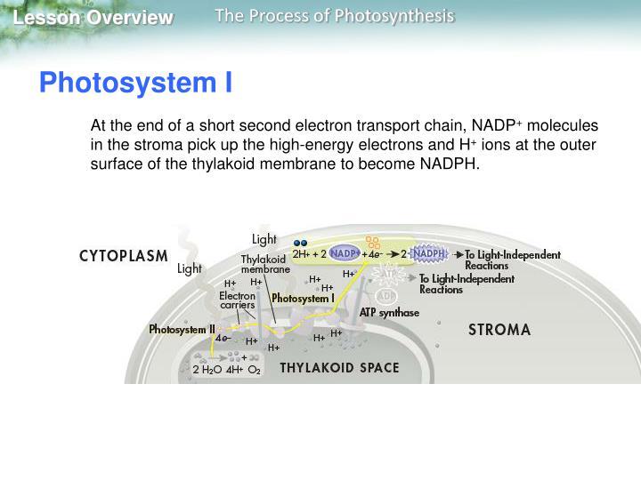 Photosystem I