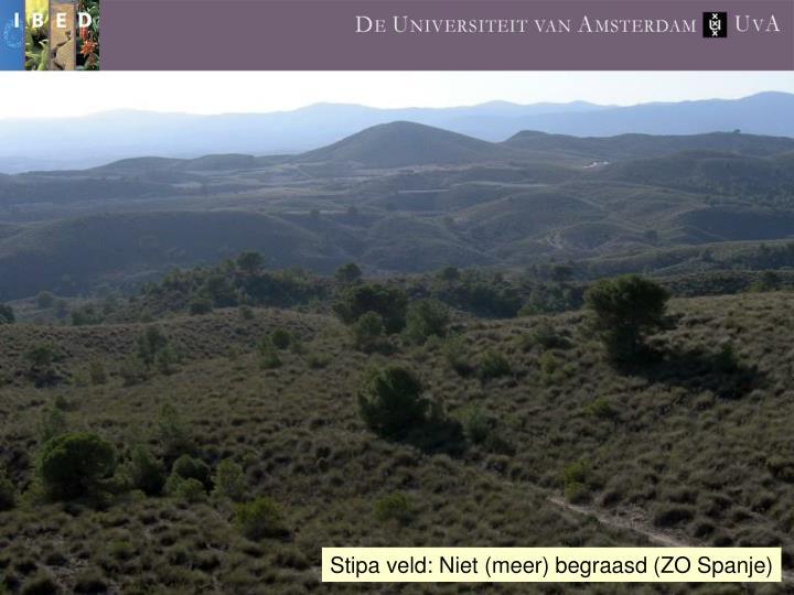 Stipa veld: Niet (meer) begraasd (ZO Spanje)