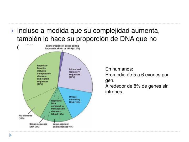 Incluso a medida que su complejidad aumenta, también lo hace su proporción de DNA que no codifica proteínas.