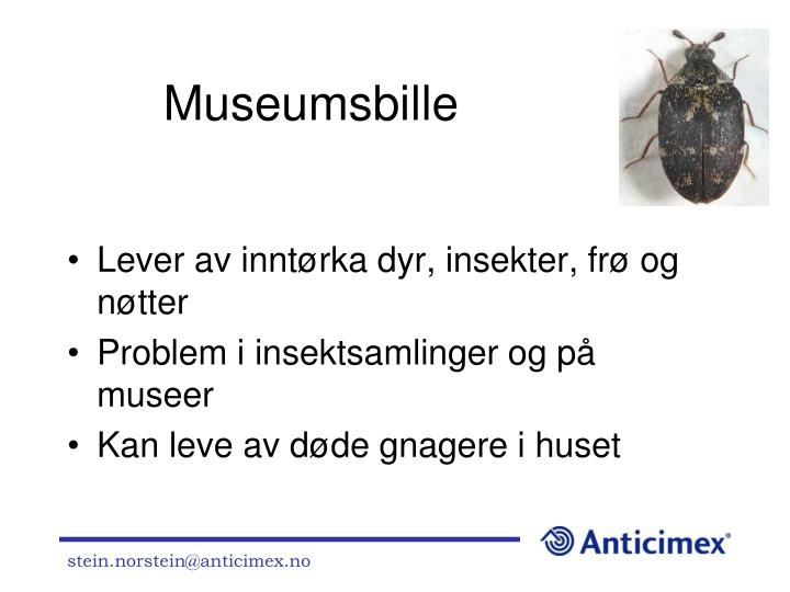 Museumsbille