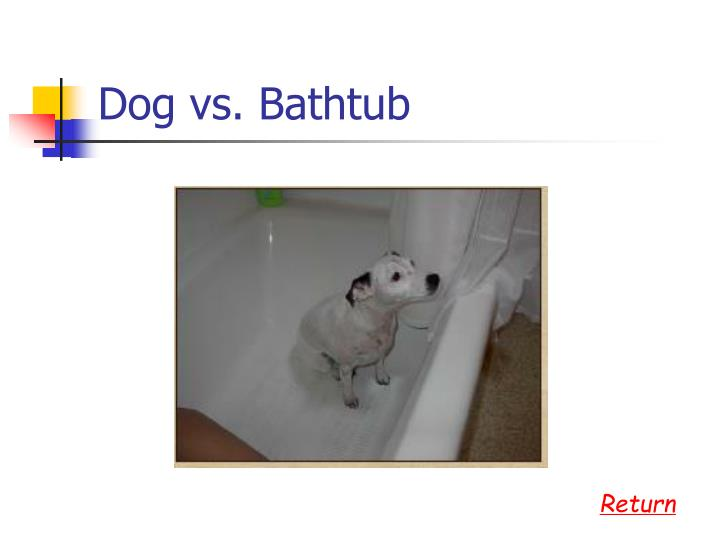 Dog vs. Bathtub