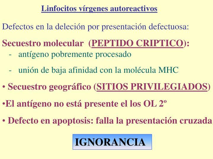 Linfocitos vírgenes autoreactivos