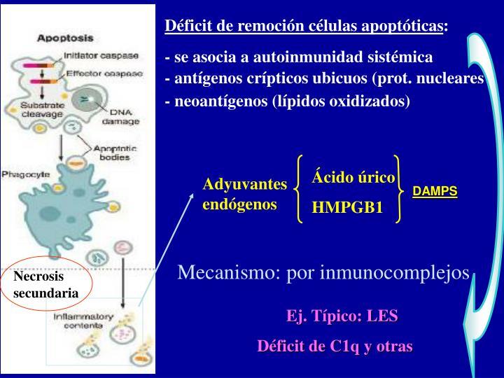 Déficit de remoción células apoptóticas