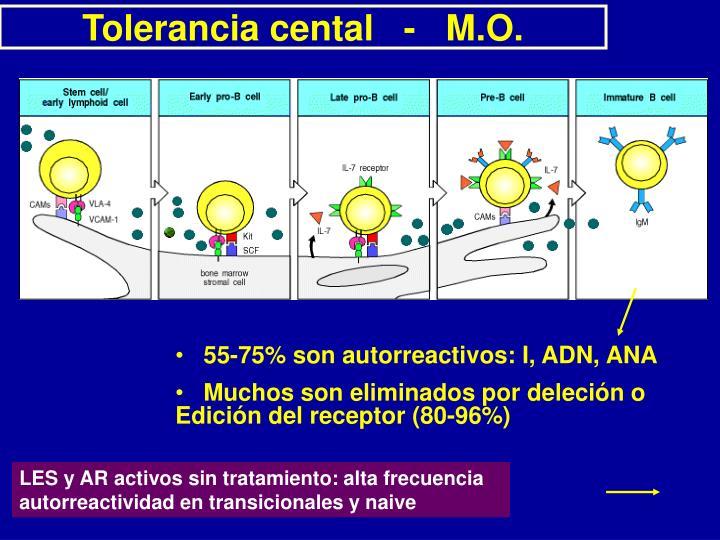 Tolerancia cental   -   M.O.