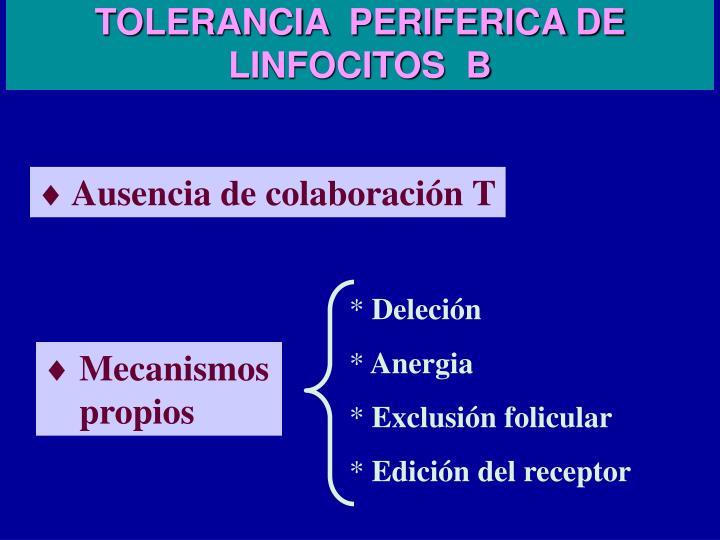 TOLERANCIA  PERIFERICA DE LINFOCITOS  B