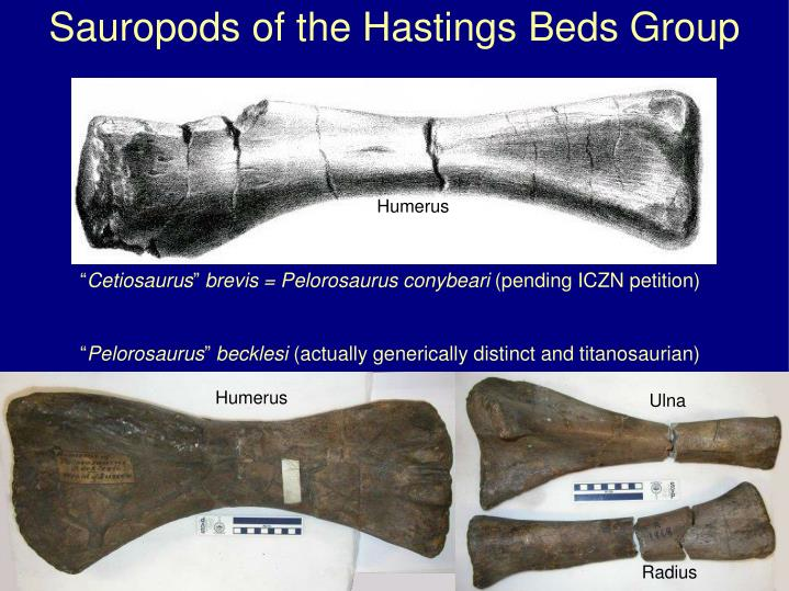 Sauropods of the Hastings Beds Group