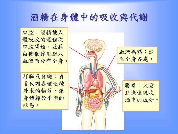 口腔:酒精被人體吸收的過程從口腔開始,並藉由擴散作用進入血液而分布全身。
