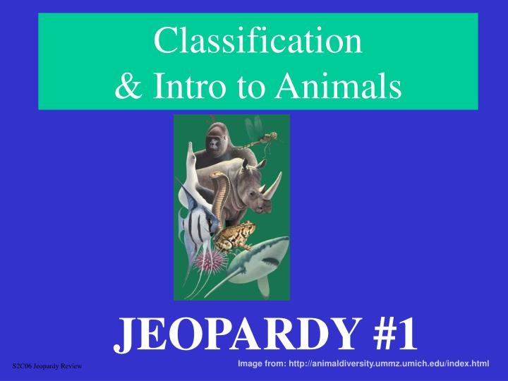 classification intro to animals
