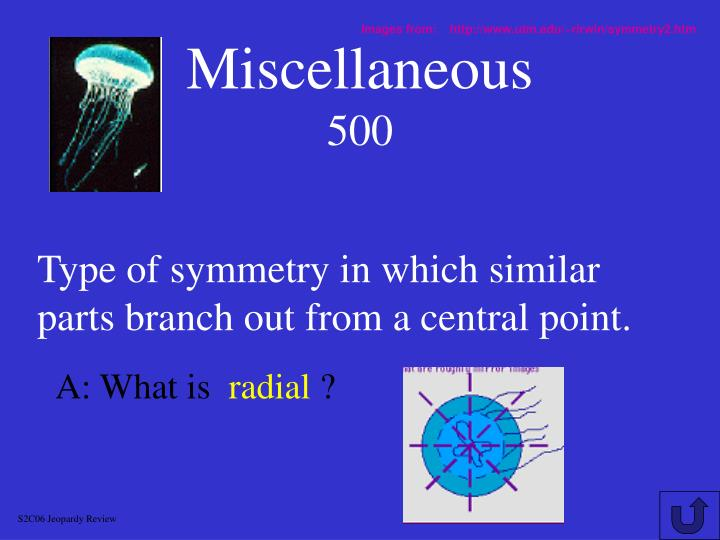 Images from:    http://www.utm.edu/~rirwin/symmetry2.htm