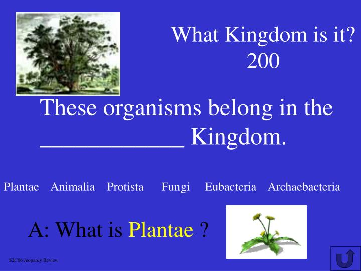 What Kingdom is it?