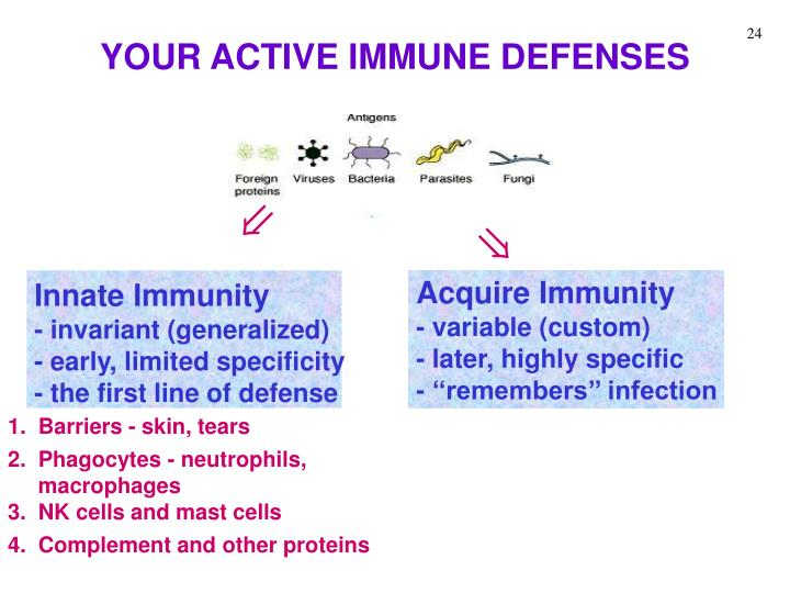 YOUR ACTIVE IMMUNE DEFENSES