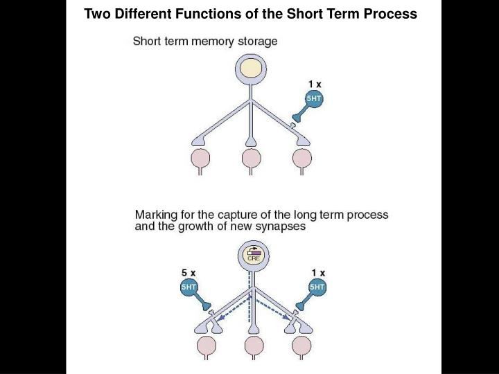Two Different Functions of the Short Term Process