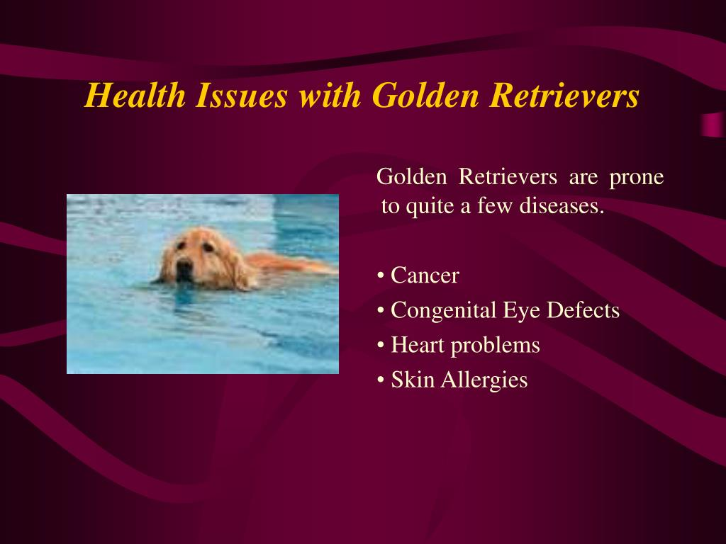 Health Issues with Golden Retrievers