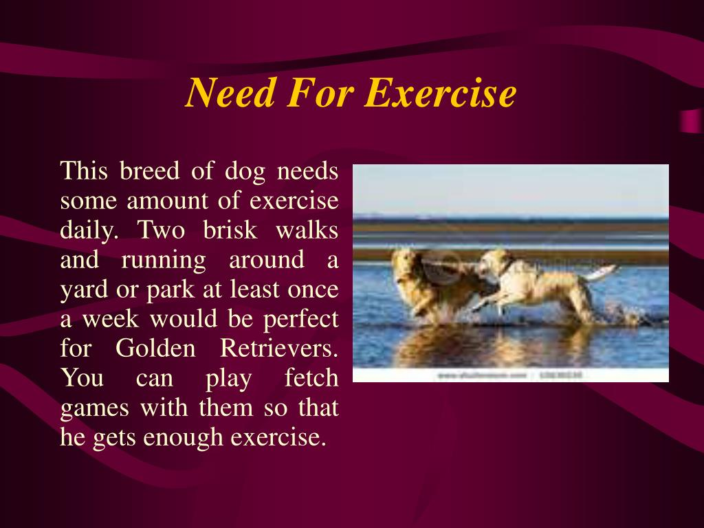 Need For Exercise