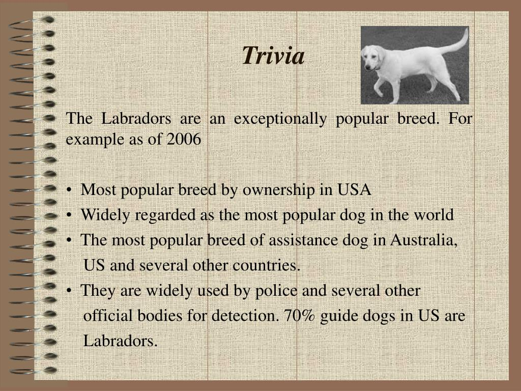 The Labradors are an exceptionally popular breed. For example as of 2006