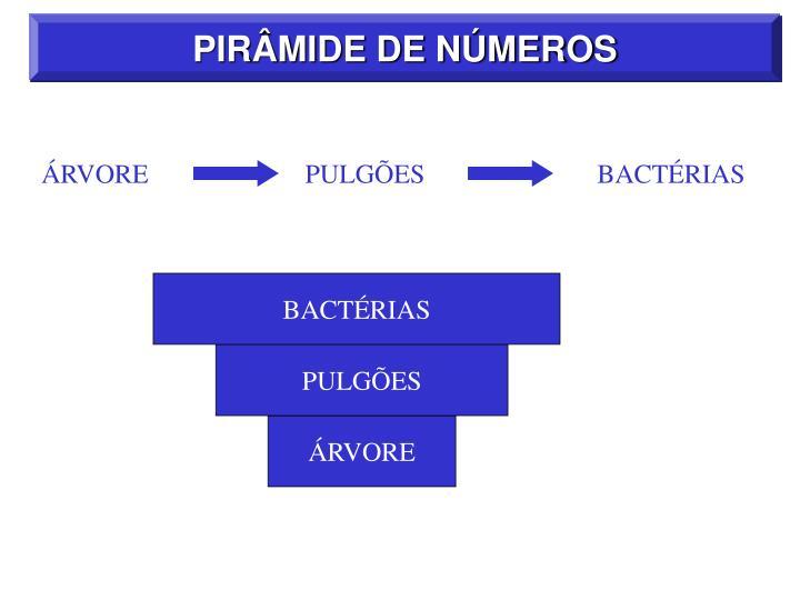 PIRÂMIDE DE NÚMEROS