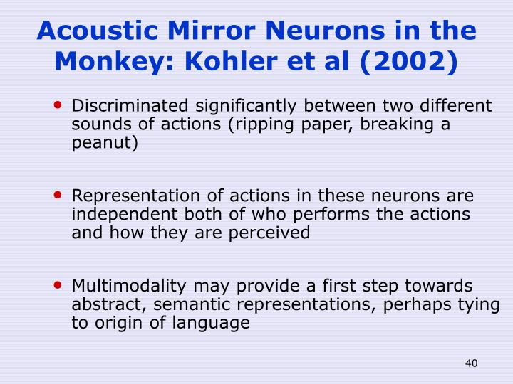 Acoustic Mirror Neurons in the Monkey: Kohler et al (2002)