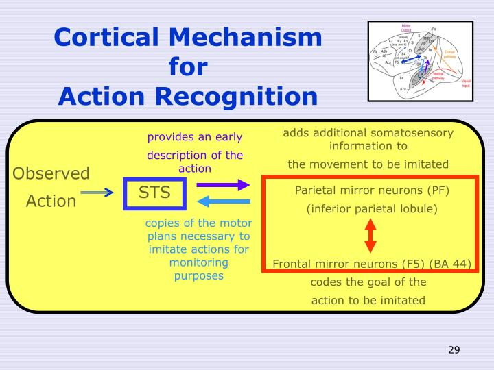 Cortical Mechanism for