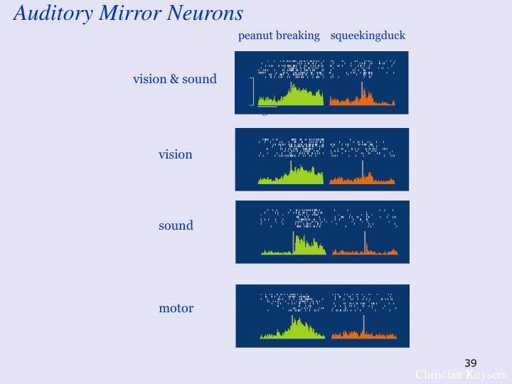Auditory Mirror Neurons