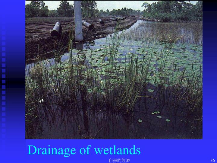 Drainage of wetlands