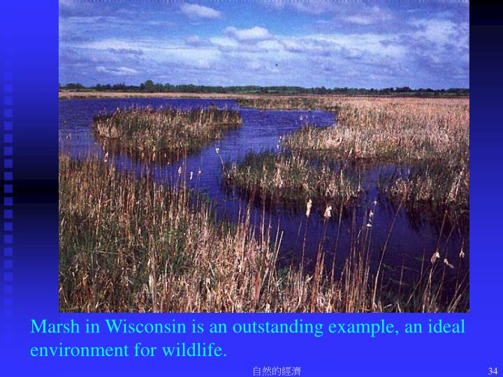 Marsh in Wisconsin is an outstanding example, an ideal environment for wildlife.