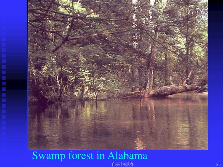Swamp forest in Alabama