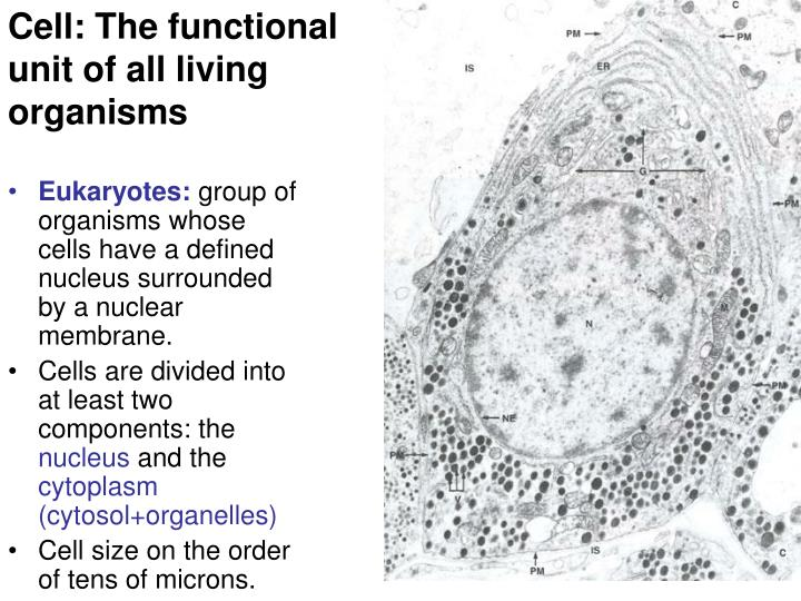 Cell: The functional unit of all living organisms
