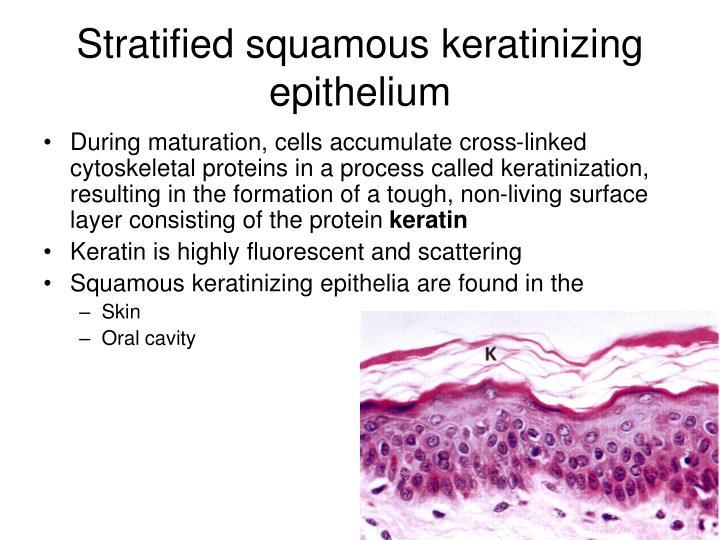 Stratified squamous keratinizing epithelium