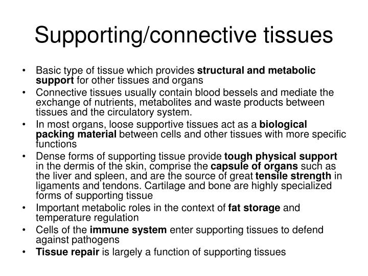 Supporting/connective tissues