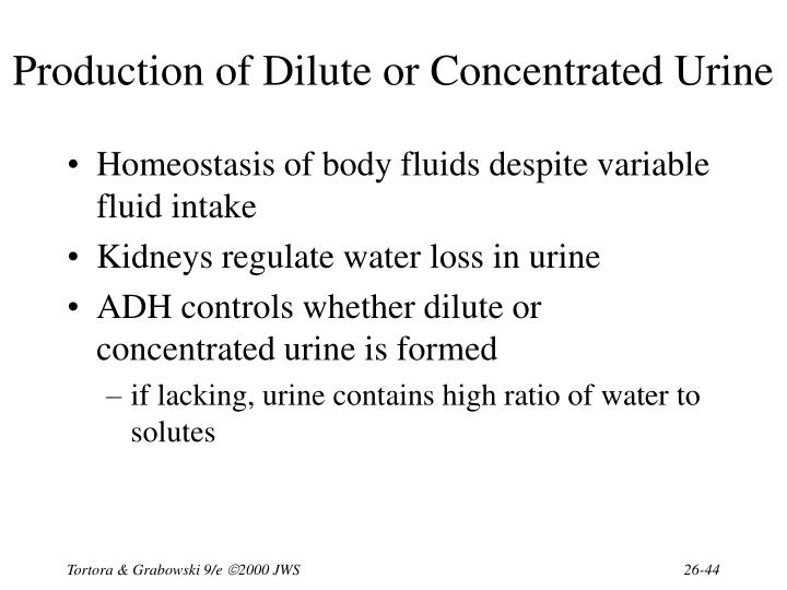 Production of Dilute or Concentrated Urine