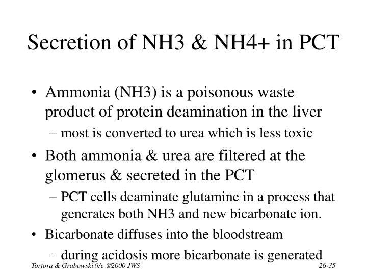 Secretion of NH3 & NH4+ in PCT