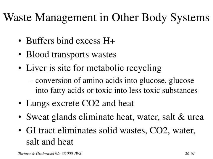 Waste Management in Other Body Systems