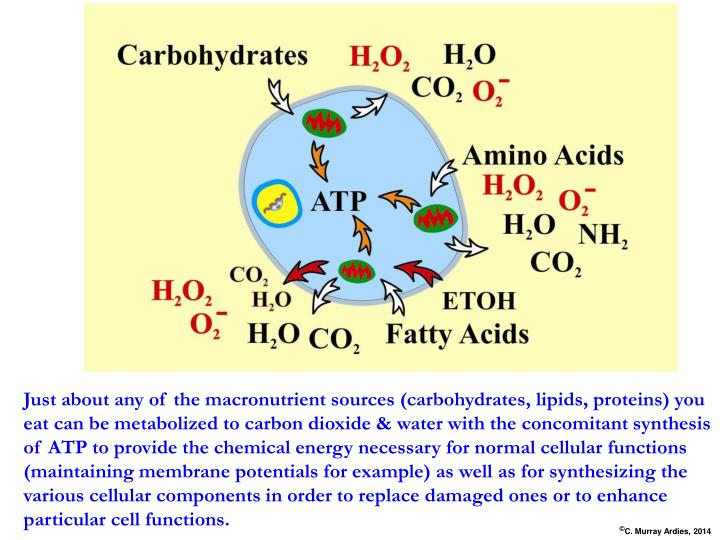 Just about any of the macronutrient sources (carbohydrates, lipids, proteins) you eat can be metabolized to carbon dioxide & water with the concomitant synthesis of ATP to provide the chemical energy necessary for normal cellular functions (maintaining membrane potentials for example) as well as for synthesizing the various cellular components in order to replace damaged ones or to enhance particular cell functions.