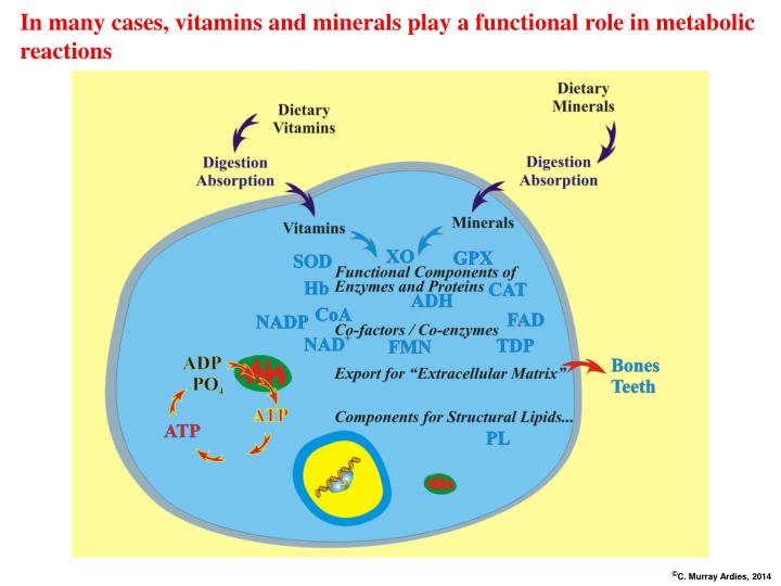 In many cases, vitamins and minerals play a functional role in metabolic reactions