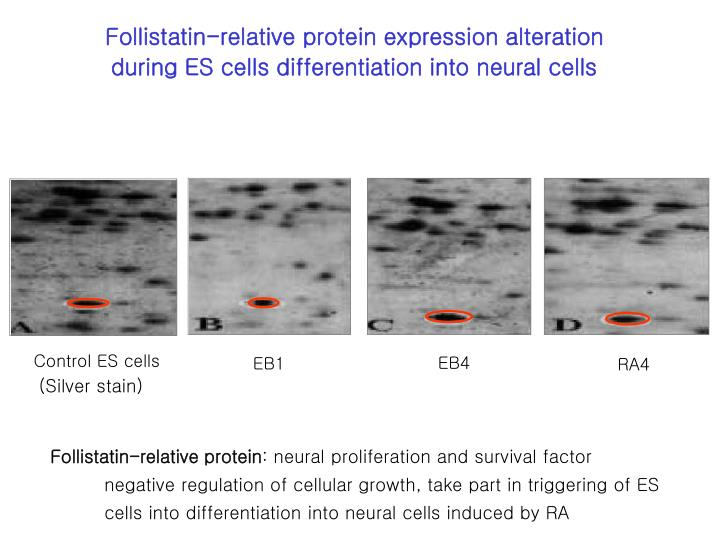 Follistatin-relative protein expression alteration during ES cells differentiation into neural cells