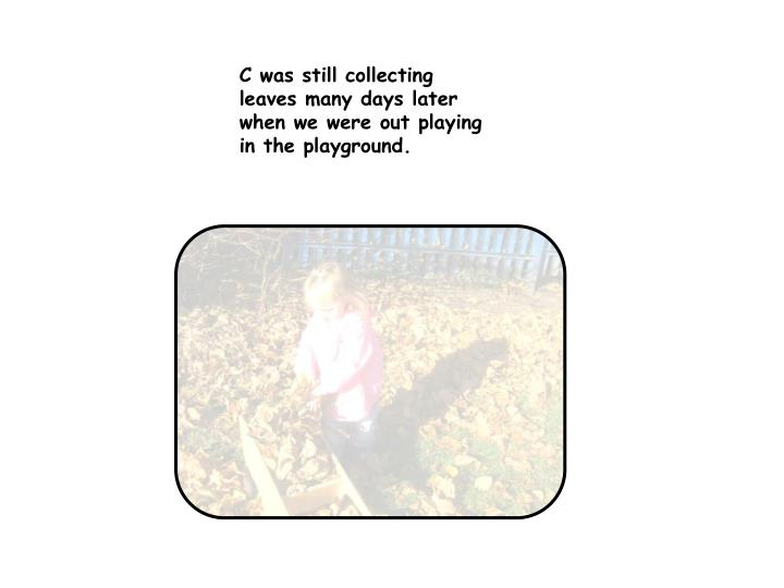 C was still collecting leaves many days later when we were out playing in the playground.