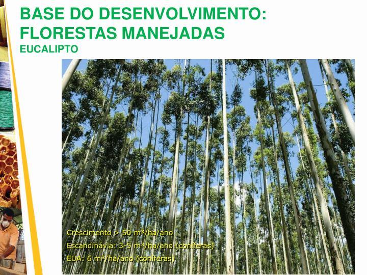 BASE DO DESENVOLVIMENTO: FLORESTAS MANEJADAS
