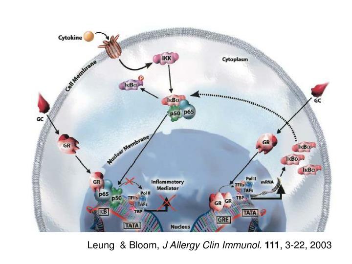 Leung  & Bloom,