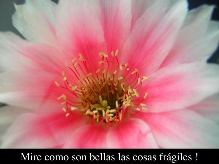 Mire como son bellas las cosas frágiles !