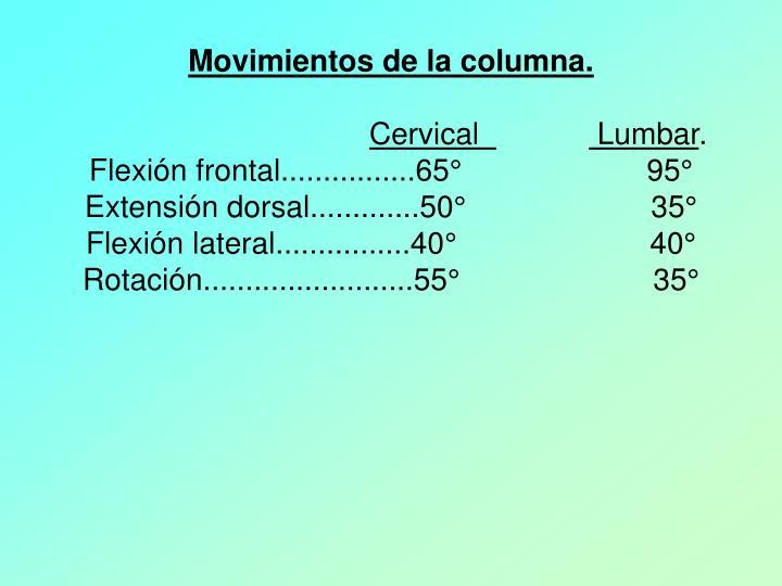 Movimientos de la columna.