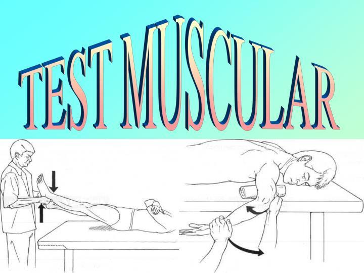 TEST MUSCULAR