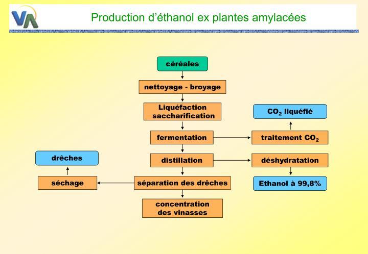 Production d'éthanol ex plantes amylacées