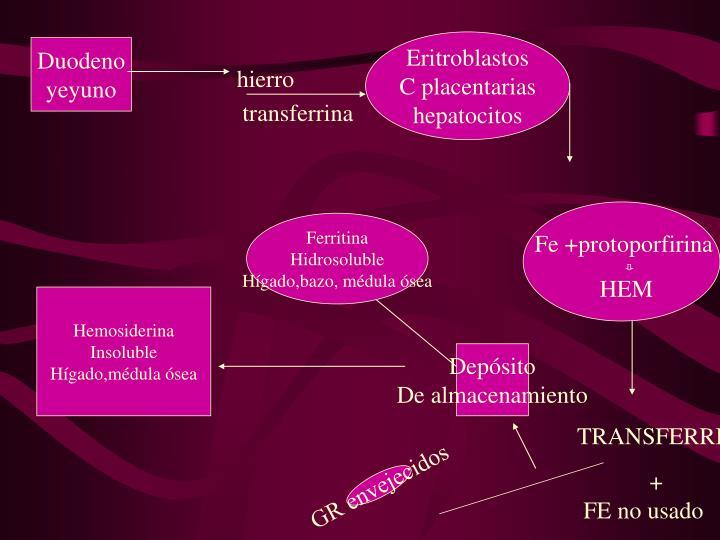 Eritroblastos