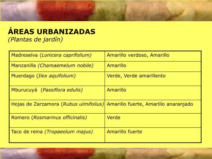ÁREAS URBANIZADAS