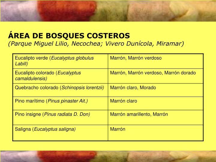 ÁREA DE BOSQUES COSTEROS