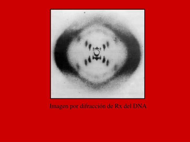 Imagen por difracción de Rx del DNA